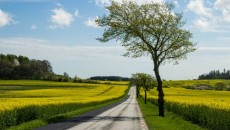Country road and yellow field